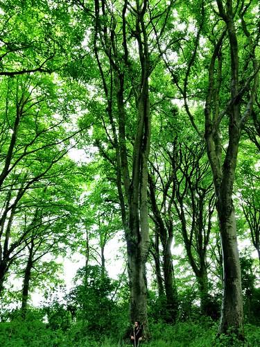 Park Wood, Wells