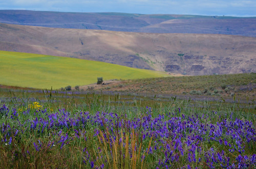 Wasco County's hills are painted in pastels this time of year.