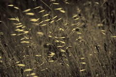 ventabren grass in the wind
