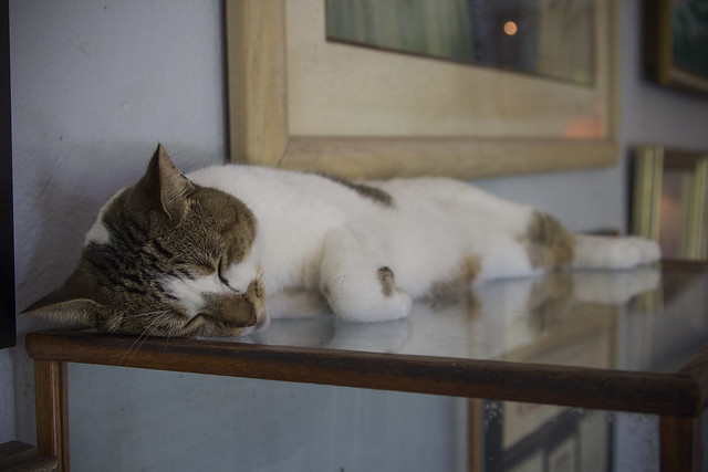 Hemingway Cat.photo by Grant Goad