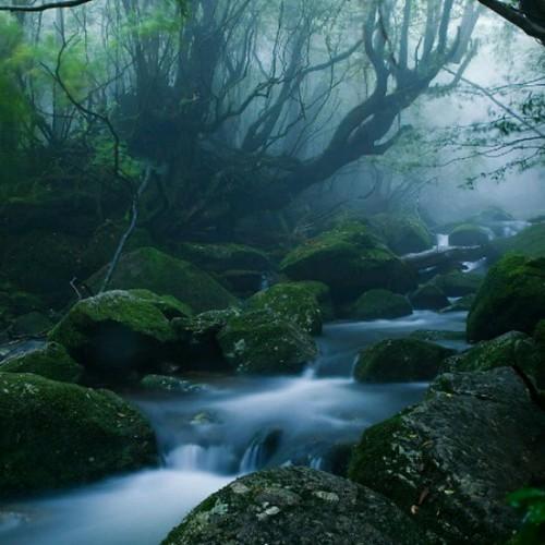 #dream #river #instapic