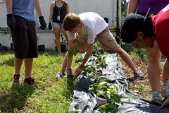 Pure Motivation -- Community Garden Project 2013
