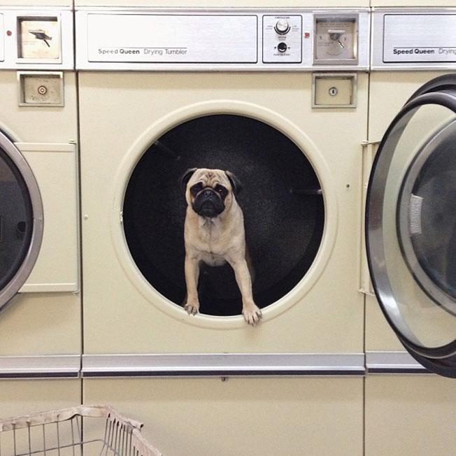 Meet-Norm-Dog-17