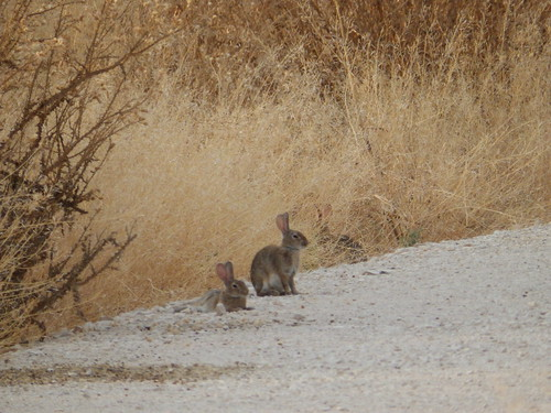 Conejos descansando