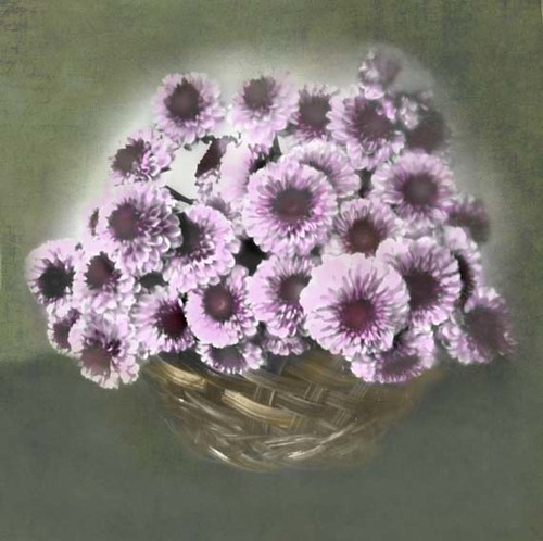 Mums Still Life, colorized by Crunchy Footsteps