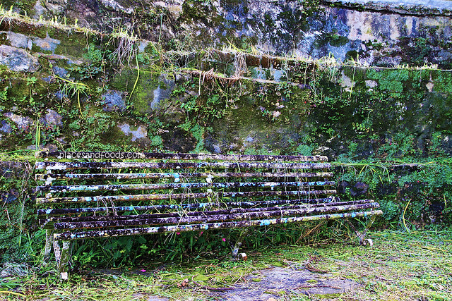 maxwell hill old bench