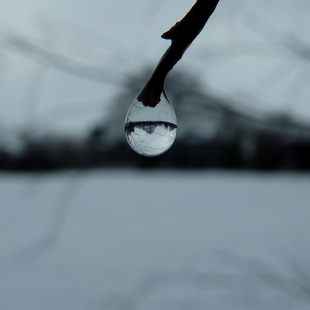 dewdrop