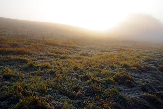 朝霧に濡れる