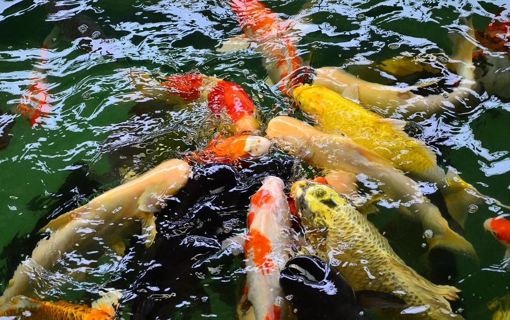Kuan Wellness Eco Park 官燕苑自然生态园