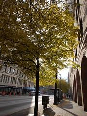 日, 2013-10-13 09:38 - Yellow Leaves 紅葉