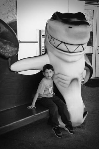 hug a shark