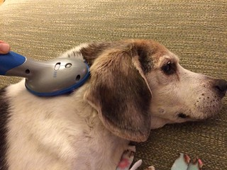 Silver Tails Senior Pet Products Infrared Pet Massager product review
