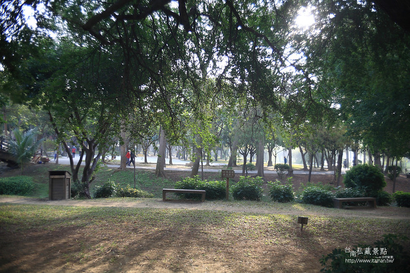 台南私藏景點--巴克禮落羽松 (2)