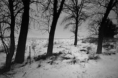 Landscapes 2014