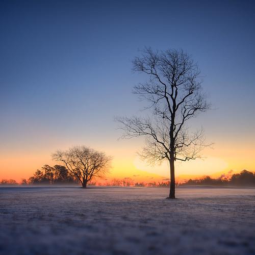trees winter snow sunrise virginia saturated va yorktown hdr tonemapped sigma1020mmf456exdchsm
