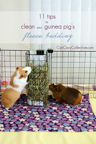 How to Clean Your Guinea Pig's Fleece Bedding