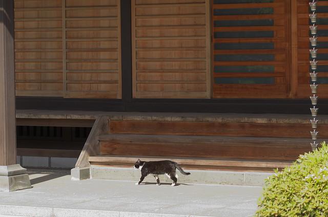 東京春景色 谷中・上野路地裏散歩 ネコ 2014年4月12日