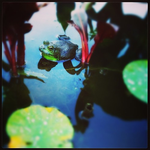 new #frog #friend @woodybond won't kiss him