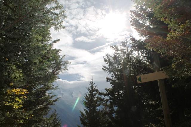 clouds through forest la floria trail chamonix