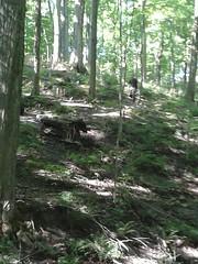 Orienteering Team Practice, Dryden Tract 24 Aug 13