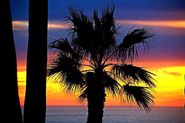 Positively the last Palm PIc I will ever Post...Possibly