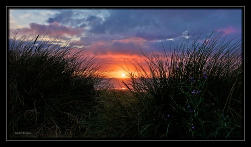 flowers sunset cloud mer france nature landscape dunes normandie plage paysages manche m9 lespieux summiluxm35mmf14asph borderfx leicam9
