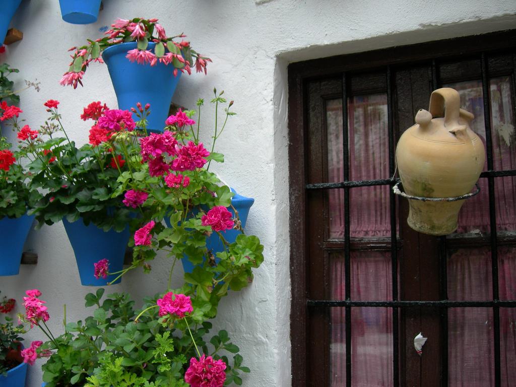 Botijo decorando una ventana. Autora, Bego Díaz