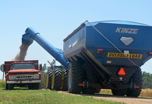 Theo dumps seed wheat on our farmers truck