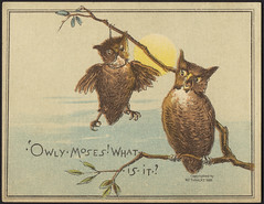 Owly moses! What is it? [front]