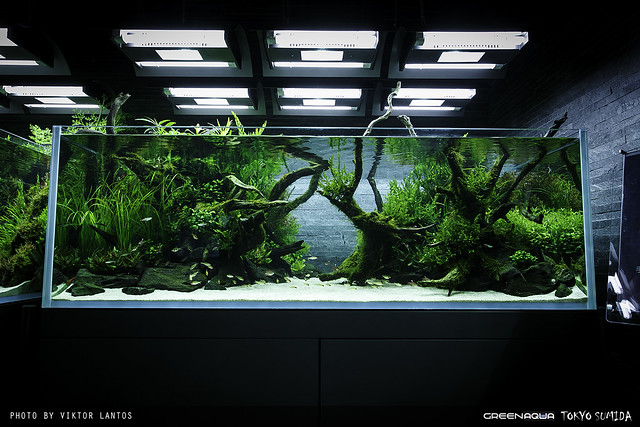 SUMIDA AQUARIUM - RELOADED The worlds best planted aquari ...