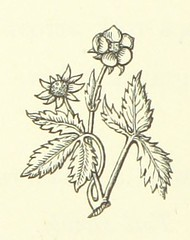 """Image taken from page 18 of 'The Rhyme of the Duchess May. [From """"Poems""""] ... Illustrated by Charlotte M. B. Morrell'"""