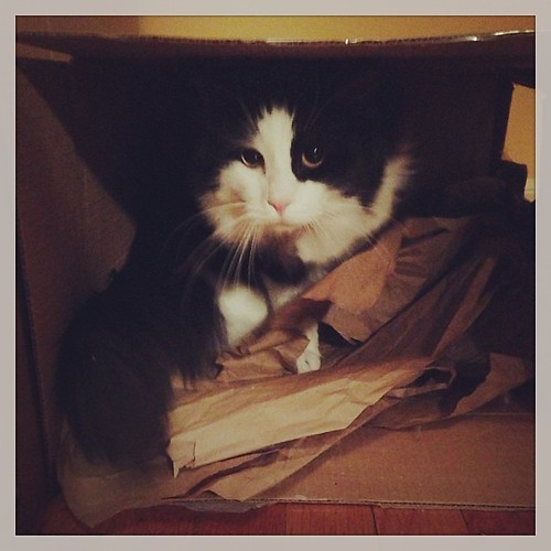 #fmsphotoaday December 20 - I'm listening to... rustling paper as the cats take turns playing in their box!