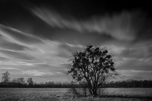 longexposure autumn blackandwhite bw tree clouds poland cpl wrocław xe1 vle nd1000 nd110