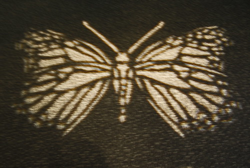 Butterfly on carpet.