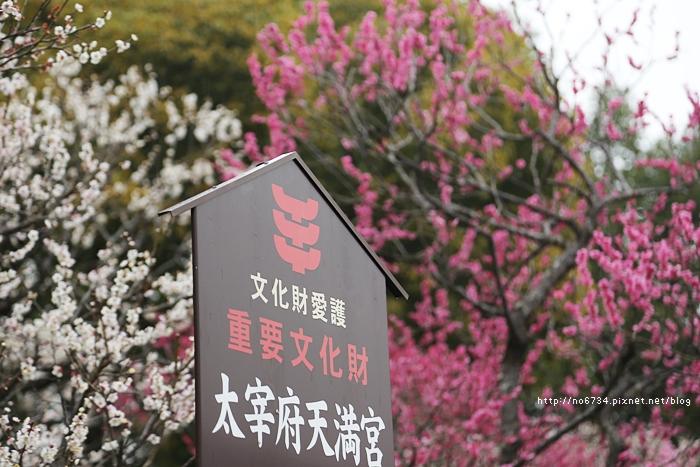 20140301_Fukuoka_0223 f