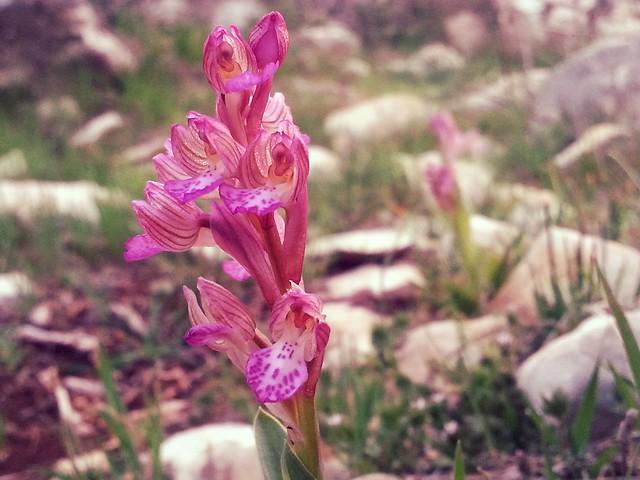 mtj_107 - pink flower :)