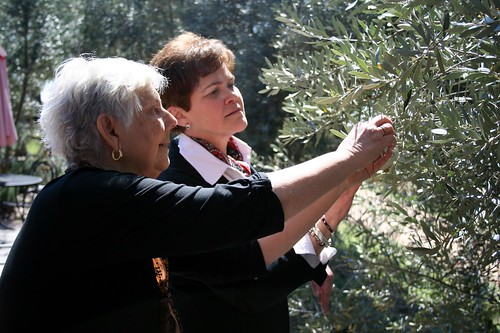 Agriculture Deputy Secretary Krysta Harden looks over olive blooms with Sandy Oaks Olive Orchard owner Sandy Winokur in Elemendorf, TX on Friday, Feb. 28, 2014. USDA photo by Melissa Blair.