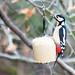 Woodpecker by fee easton