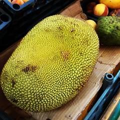 yellow, green, produce, fruit, food, jackfruit,