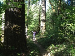 Enjoying the old growth forest