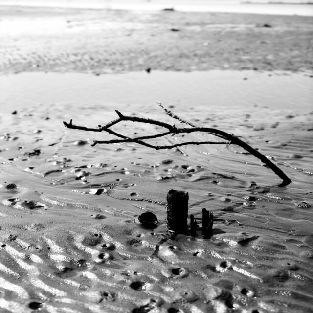 春の海 ひねもすのたり~