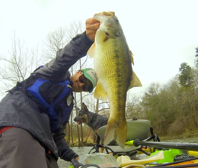 Big Alabama spotted bass caught by Drew Gregory