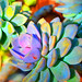 Succulent Color - Botanical Art by Sharon Cummings
