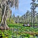 Blackwater, Lily Pads, Cypress, and Canoe Trail by TimothyJ