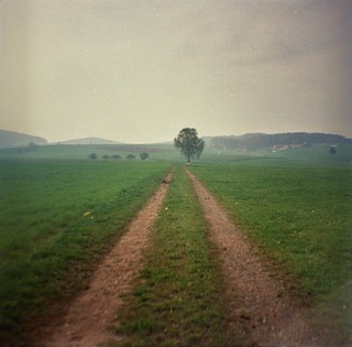 2014 Misty day in Germany (DIANA MINI)
