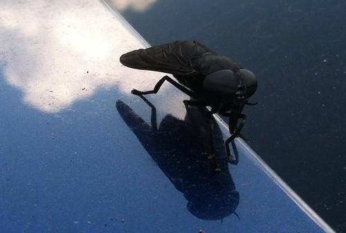 insects bugs batman darkknight