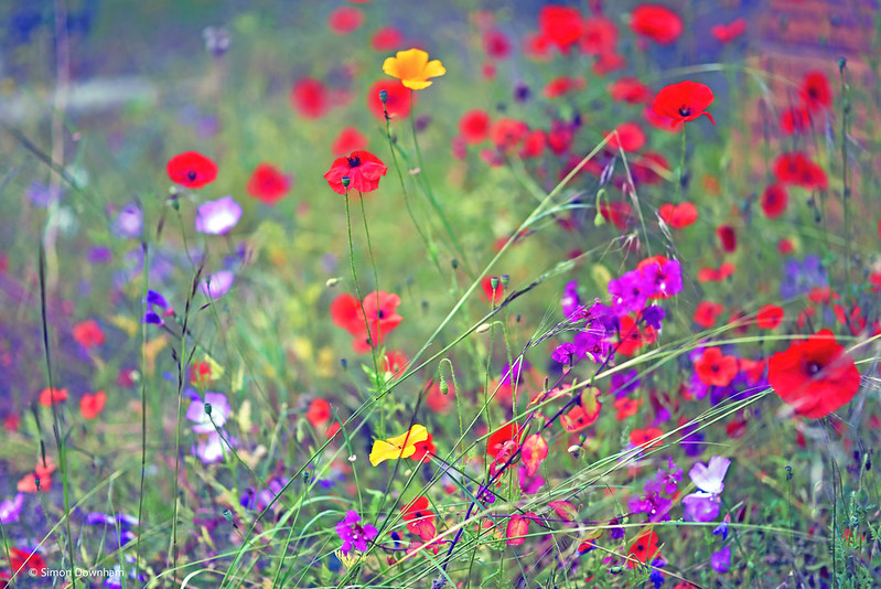 Wild Flowers in Eden