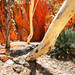 Standley Chasm, NT by Louise Denton