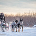 Wed, 02/15/2017 - 10:29 - Yukon Quest 2017 - Julien Schroder
