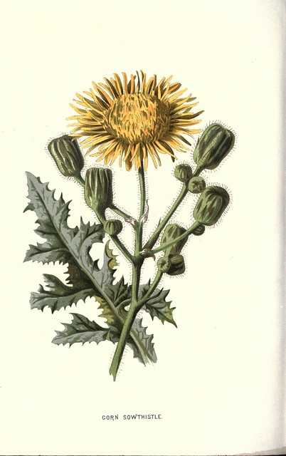 Familiar wild flowers figured and described by F. Edward Hulme v.2